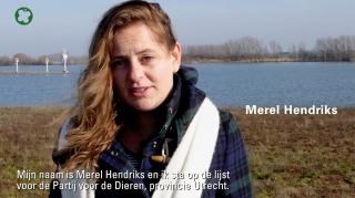 Merel – Partij voor de Dieren